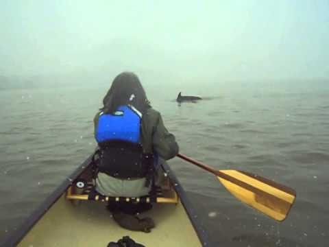Dolphin in East River (filmed via canoe)
