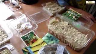 Посадка в опилки на рассаду огурцов, кабачков, тыквы, кукурузы, арбузов и дынь