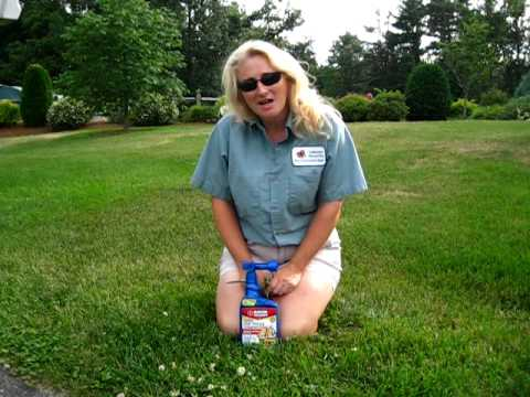 Bayer Lawn Weed Killer