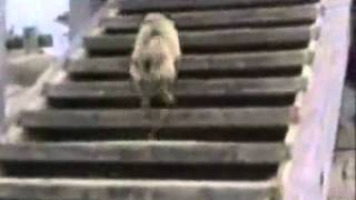 getlinkyoutube.com-Try not to laugh. Best Animals Fail & Wins Compilation Ever !! Funny Hahahah !!