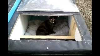 getlinkyoutube.com-Winter Cat Shelter/House: Feral Cat Day