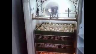 """getlinkyoutube.com-فقاسة بيض يدوية منزلية """" ثلاجة """"500 بيضة"""