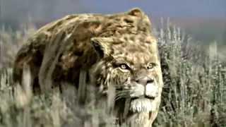 getlinkyoutube.com-SMILODON - Sabre Toothed Beast [HD]