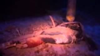 getlinkyoutube.com-นักประดาน้ำ พบสิ่งที่ไม่น่าเชื่อใต้ท้องทะเลลึก