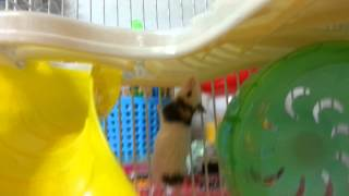 getlinkyoutube.com-나의 팬더마우스