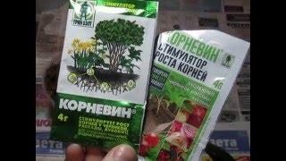getlinkyoutube.com-Ответная реакция на корневин.Наращиваем корни.