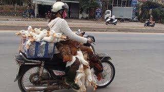 Asian Cub  (ベトナム・カンボジア・ラオス・タイ・インドネシアのカブ))