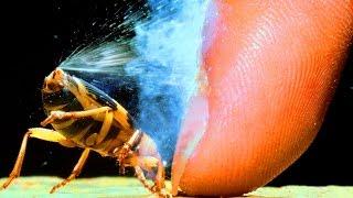 getlinkyoutube.com-驚異的な能力を持つ10の動物たち