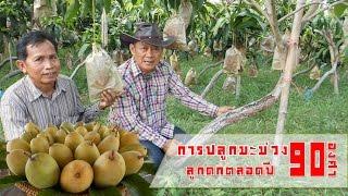 getlinkyoutube.com-การปลูกมะม่วง 90 องศา
