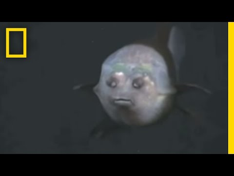 VIDEO: A Freaky Fish Of The Deep Blue
