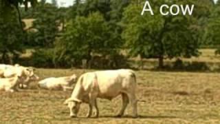 getlinkyoutube.com-Farm animals