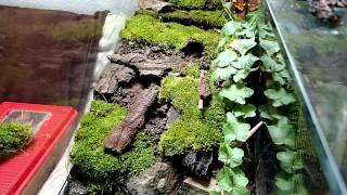 getlinkyoutube.com-Terrarium Setup: Salamanders & other amphibians || Terrarienaufbau: Feuersalamander