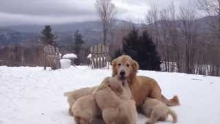 Mother Playing With Her Pups