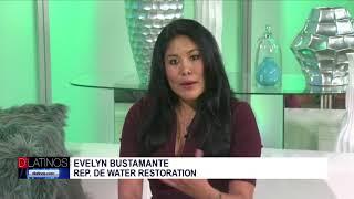Cuidado con el Moho o Mold. Evelyn Bustamante de Water Restoration nos da valiosos consejos