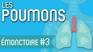 Est-ce que vous prenez bien soin de vos Poumons ?   Les Émonctoires en Naturopathie