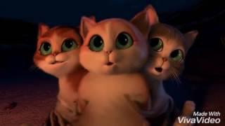 Film kucing lucu dan mengemeskan kartun