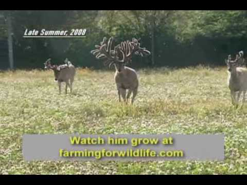 World Record Buck: Largest Whitetail EVER