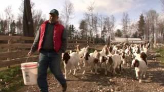 getlinkyoutube.com-Boer Goats