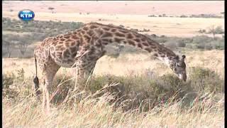 Serengeti controversy -Swahili