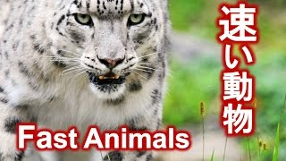 getlinkyoutube.com-【動物バトル!】速さランキング~The 10 Fastest Animals