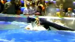 Download video: Attaque d'orque au Marineland d'Antibes