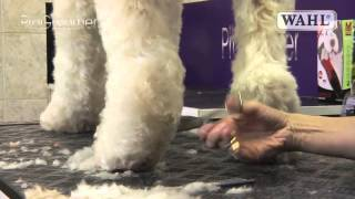 Grooming Guide - Labradoodle - Pro Groomer