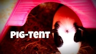 getlinkyoutube.com-Homemade Guinea Pig House *Pig-Tent*