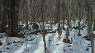 Trail Camera Wildlife Mysteries