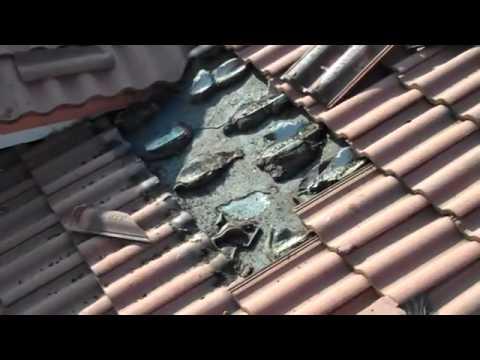 Murcielagos en el techo
