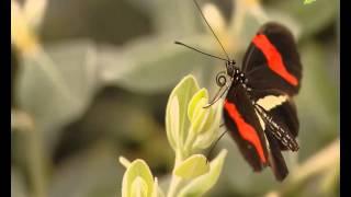 getlinkyoutube.com-سرود فارسی ای دختر بلوچ 23-09-2013