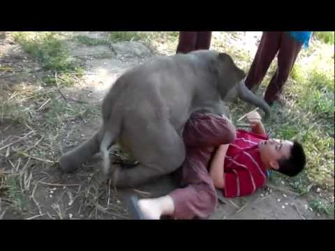 Overly Attached Baby Elephant