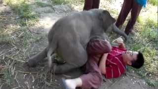 getlinkyoutube.com-Baby Elephant Loves Cuddling with Arthur (Original)