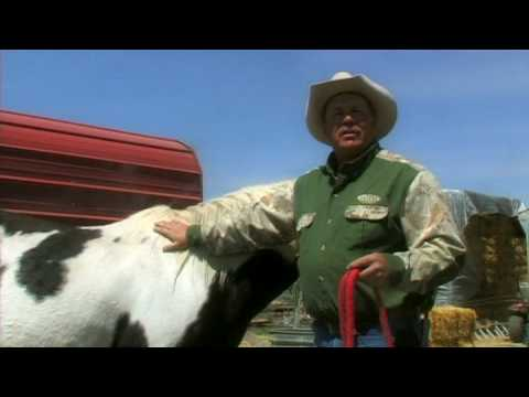 Pregnant Horse Care : Mare Breeding Signs