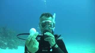 getlinkyoutube.com-Šta se dešava kad razbijete jaje na 20m morske dubine