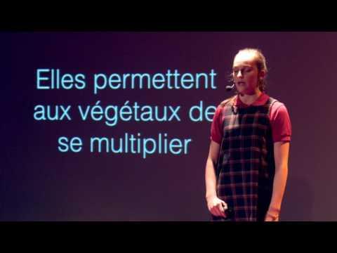 Les abeilles   Daphnée Bisson   TEDxAcademieSaintLouis