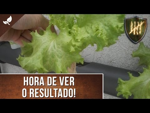 Projeto: Horta Hidropônica vertical em PVC (Pt 2 - Cultivo)