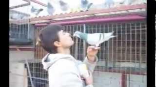 getlinkyoutube.com-Pigeon Racing Training and education. How to Pigeon feed