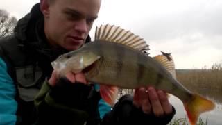 getlinkyoutube.com-Jesienne łowienie okoni na spinning metodą opadu | HD | Wędkarstwo spinningowe