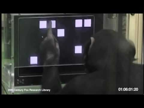 Chimp Beats Human: Intelligence Test