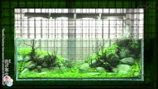 getlinkyoutube.com-[ADAview] Layout Making Process using Wabi-Kusa -180cm Tank- A Video in Conjunction with AJ213