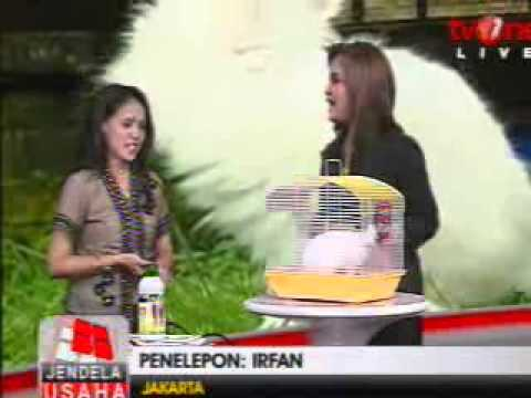 TV One 21-3-11: Sukses Ternak Kelinci - Bu Nuning