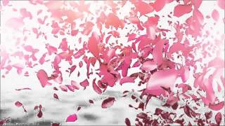getlinkyoutube.com-Petals Logo Reveal | VideoHive Templates | After Effects Project Files