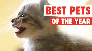 getlinkyoutube.com-Ultimate Pet Videos of the Year Part 1 || 2015
