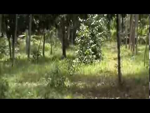 วนเกษตร ศูนย์ยั่งยืน แหล่งเรียนรู้ เศรษฐกิจพอเพียง ควน ป่ายาง นา
