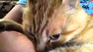 getlinkyoutube.com-Cat suckles human