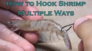 How to Hook Shrimp Multiple Ways