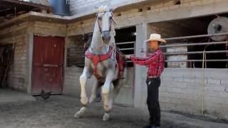 Caballo Lindoro - Bailando el Niño perdido