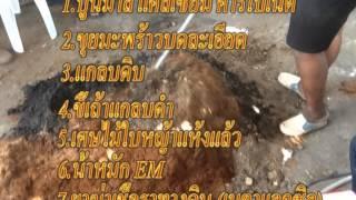 getlinkyoutube.com-มะนาวแป้นในวงบ่อ ใช้วัสดุทดแทนดิน