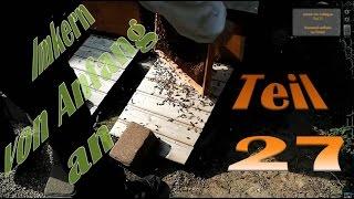 Imkern von Anfang an - Teil 27 - Bienenvolk auflösen bei Dadant