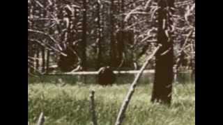 getlinkyoutube.com-BIGFOOT Video Real Sasquatch FILM weird unknown creature Monster wild swamp people Eskimo